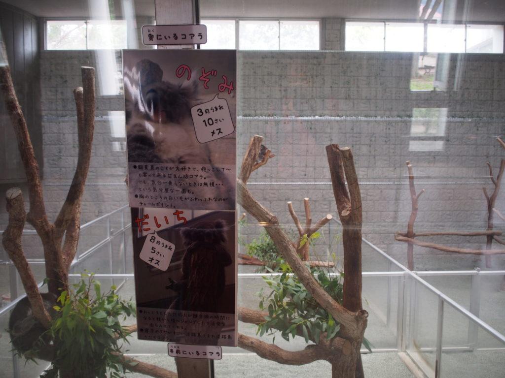 コアラ館にはオスとメスの2匹のコアラがいる