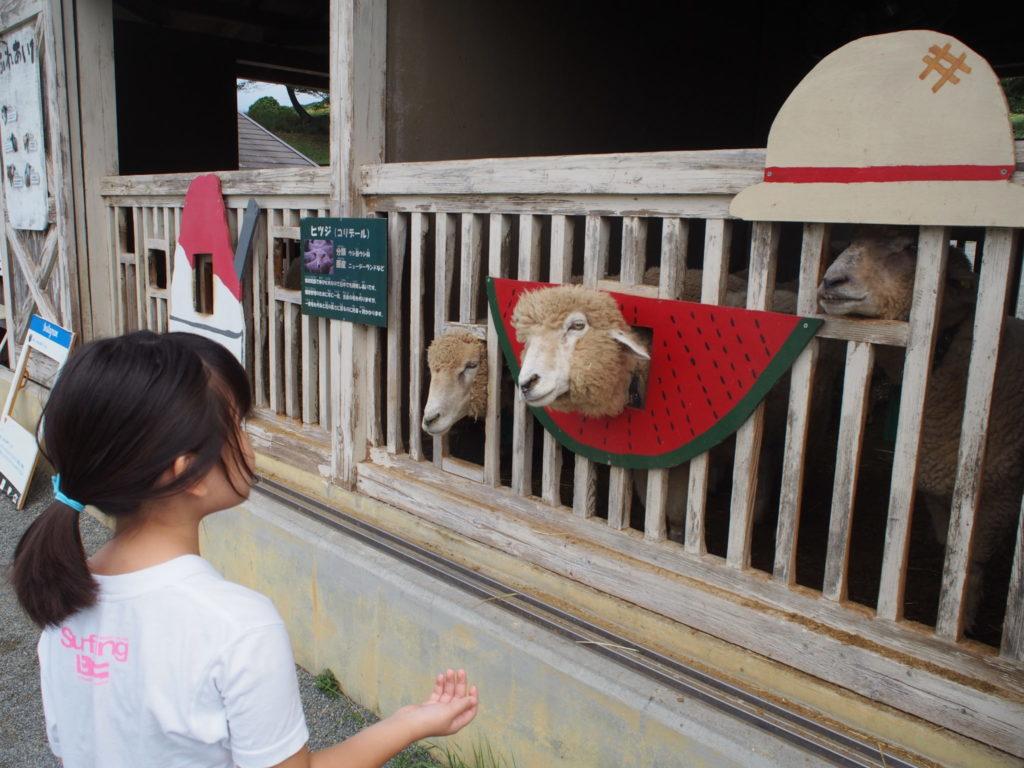 エサを待つ羊たちのいる「ひつじのくに」