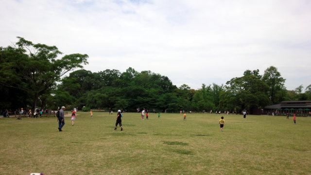 京都植物園の芝生広場