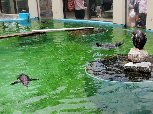 気持ちよさそうに泳ぐペンギン